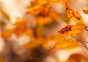 Colors of autumn by speartime