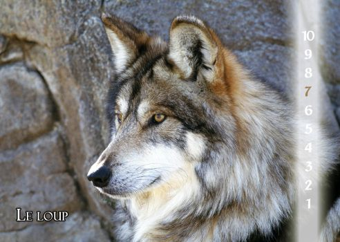 10 - The wolf by Varagh