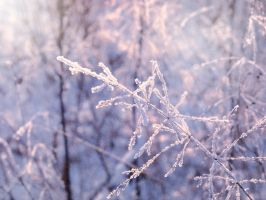 Frozen Fragility by Lylly55