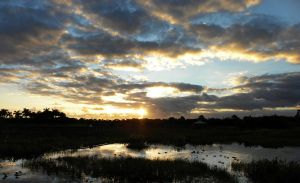 Swampy Sunrise by flowerhippie22
