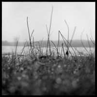 2013-177 Rainy morning at Hundred Acre Pond by pearwood