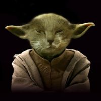 When I was a cat I was a Jedi by Jbuth