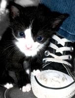 the kitten and its shoe by fifthchukka
