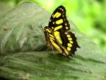butterfly 34 by Pagan-Stock