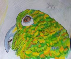 Parrot by dailybunny