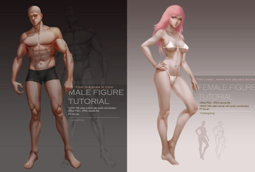 Female / Male Body Tutorial by yuchenghong
