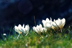 Spring up by AljoschaThielen