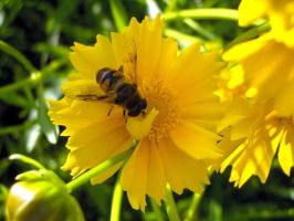 Busy bee 2 - print by 99-in-the-shade