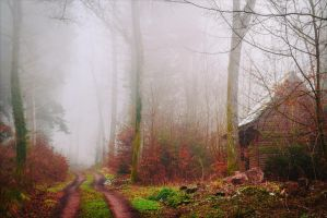 Lost in the Woods... again. by Aenea-Jones