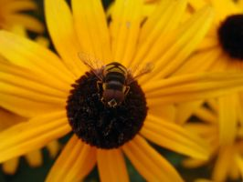 Bee by Austron