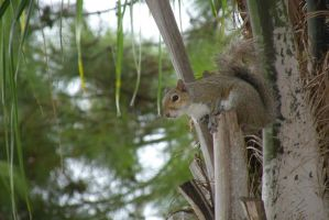 Squirrel on a Palm Tree by EllieZ