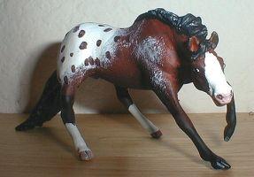 Appaloosa Cutting Mare by Riabhach