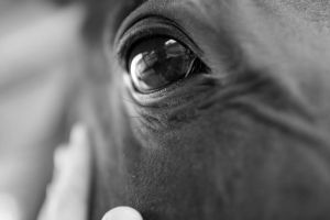 Horse Close Up by Acolite