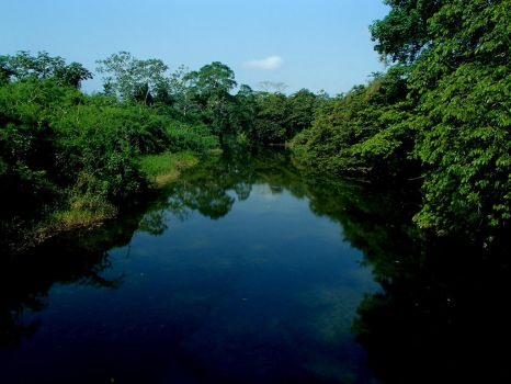 one of the Rivers in Belize by graverchan
