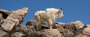 King of the Mountain by EisenFeuer