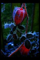 Frozen Heart by Forestina-Fotos