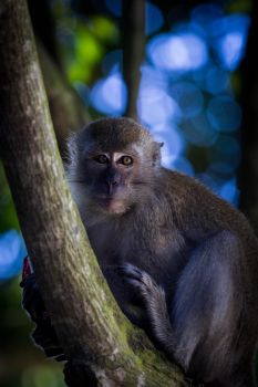 Monkey by DrDrum666