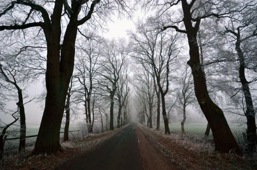 road to nowhere by augenweide