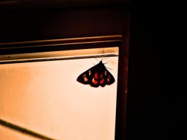 Butterfly by StationAperture