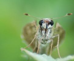Front View of a Butterfly by Larah88