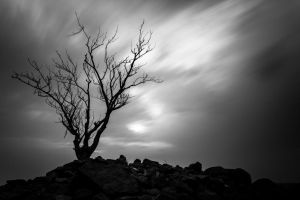 Dead Tree under the Clouds by mhmalali