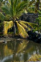 Hawaii IV by IQuitCountingStock