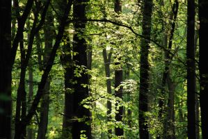 deciduous forest by Wilithin