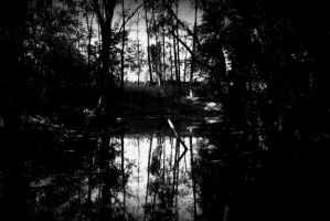 Dark forest by Budeltier