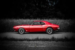 red bird by AmericanMuscle
