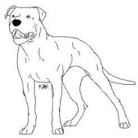 American Bull Dog Lineart by Wolfs-Hybrid