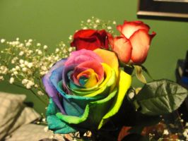 Rainbow Rose by Tanahachi