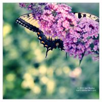 Swallowtail Incognito by Karl-B