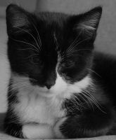 The philosopher by cat-lovers