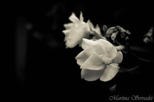 White flower by Martina31