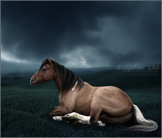 Calm before the storm by araphra