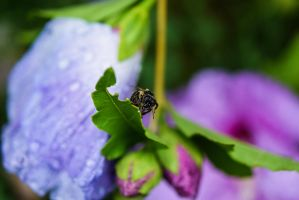 Raindrops XI - Wet Bee by Rela1985