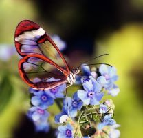 Forget me not... by Marmaluke