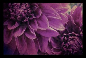 tandem blooms. by remy-lenour