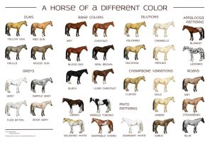 Horse Colors Poster by Reveraine