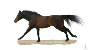 A brown horse by Suspirias