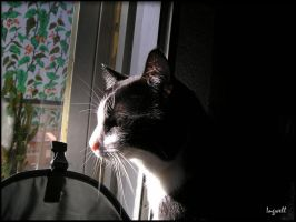 Cat looking out by IngwellRitter