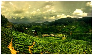 Cameroon highlands Boh Tea Estate by samart7