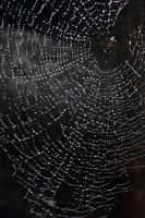 Sparkly web 1 by LucieG-Stock