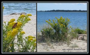 Cape Cod Collage by caybeach