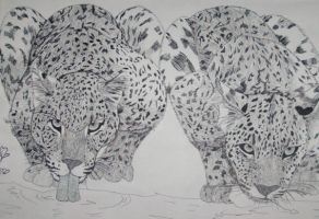 Leopards by Nightmare-Neva