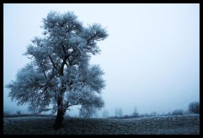 Lonely Tree III by sphyle