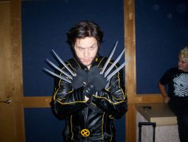 Wolverine by Gingersnap87