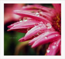 raindrops on pink. by aprylle0497
