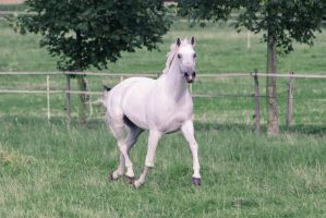 Warmblood Mare Trotting Pasture Stock II by LuDa-Stock