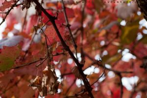 Autumn leaves 2 by serasfan